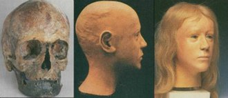 Windeby I - Reconstruction process of the face, by Richard Helmer.