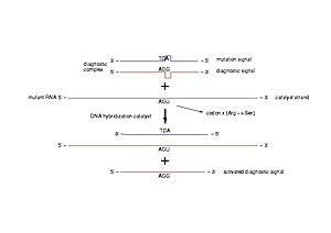 Diagnostic of pathogenic mutations. A diagnost...