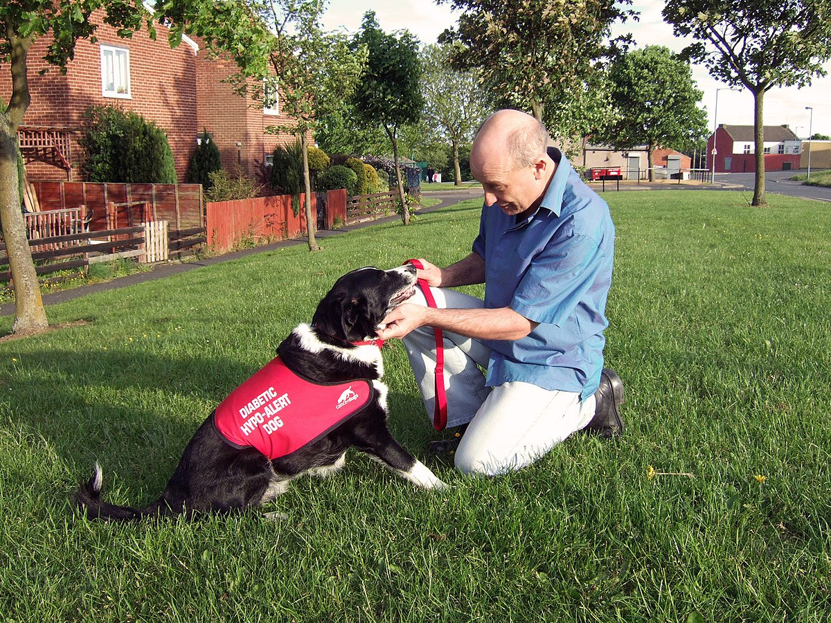 Image Result For Trained Service Dogs