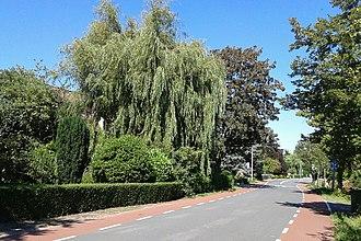 Mariëndijk - Image: Weeping Willow on the Mariendijk, South Holland, August 2016