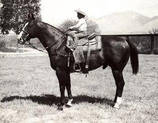Lightning Bar Quarter Horse stallion