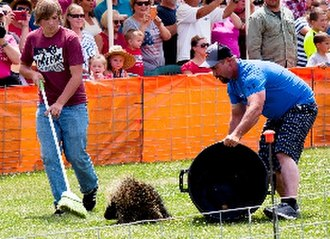 Council, Idaho - Racers and their porcupine competing in the 2017 World Championship Porcupine Race