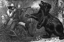 Bear attack - Wikipedia