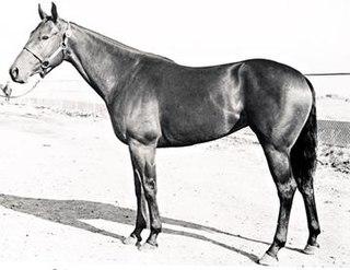 Barbara L Quarter horse race mare