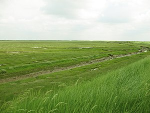 Managed retreat - Freiston Shore Managed Realignment site, Lincolnshire