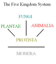 The original, now outdated, five-kingdom system.