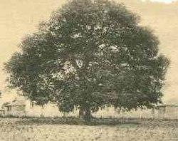 Emanicipation oak hampton-cropped.jpg
