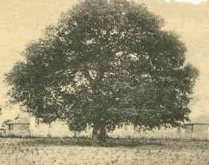 Hampton, Virginia - On September 17, 1861, Mrs. Mary Smith Peake taught the first classes to African American children on the grounds of what is now Hampton University at Hampton Roads in Virginia under the shade of the Emancipation Oak.