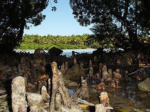 Shaviyani Atoll - Image: Mangrove swamps of maroshi maldives