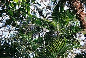 Bloedel Floral Conservatory - Image: Bloedel exotic plants