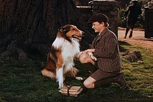 Pal (dog) - Pal in his first screen appearance as Lassie in MGM's Lassie Come Home (1943), with Roddy McDowall as Joe Carraclough