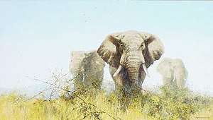 David Shepherd (artist) - David Shepherd. Three Tuskers