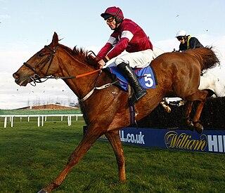 Weapons Amnesty Irish-bred Thoroughbred racehorse