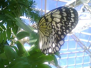 Cecil B. Day Butterfly Center - Image: Bf 1MNM2007