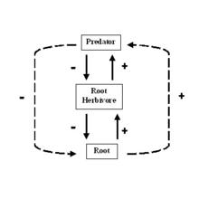 nematodes soil food web