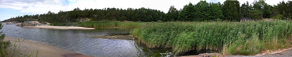 A previously sandy beach invaded by reeds.