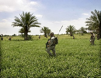28th Infantry Division (United States) - Iraqi and U.S. Soldiers from the 28th Infantry Division (attached to I Marine Expeditionary Force) search for Iraqi Resistance members and weapons caches in the Jazeera area of Ramadi, 2 June 2006.
