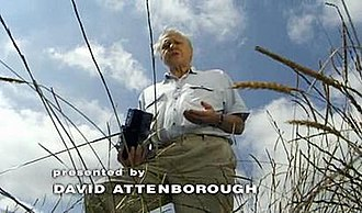 BBC Wildlife Specials - David Attenborough in the opening sequence of Lions: Spy in the Den