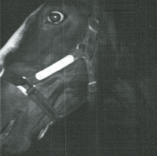 A close-up, grainy black and white photograph, probably of the left side of Shergar's face