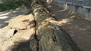 Geological Survey of India -  18 meter fossilised tree trunk at Sathanur National Fossil Wood Park, a National Geo-heritage Monument site.