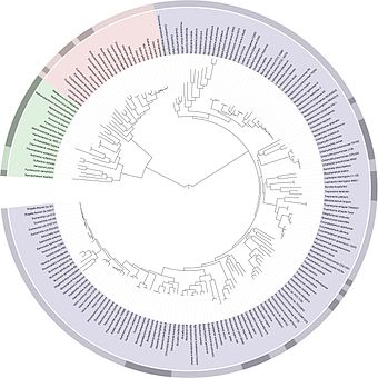 Fig. 2: A highly resolved, automatically generated Tree Of Life, based on completely sequenced genomes .