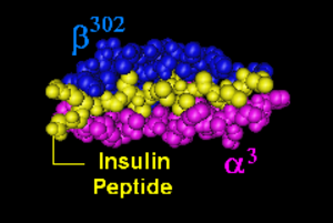 HLA-DQ8 - Rendering of HLA-DQ8 with insulin peptide in the binding pocket looking down over the binding groove