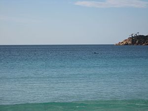 Freycinet National Park - Image: Dolphins in Wineglass Bay