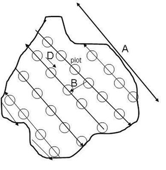 Line plot survey - Line plot survey layout