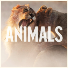 Animals Maroon 5 Song Wikipedia