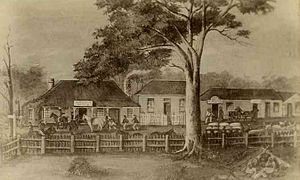 Mount Gambier, South Australia - Settlement of Gambierton in 1856 including Mitchell's Hotel