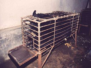 "A bile bear in a ""crush cage"" on Huizhou Farm,..."