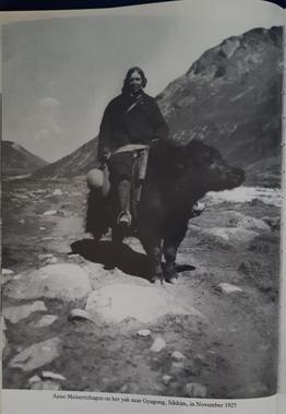 Annie Meinertzhagen on a yak