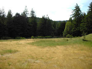 Humboldt Redwoods State Park - Meadow adjacent to Albee Creek Campground