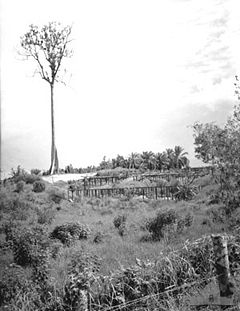October 24, 1945. Sandakan POW camp. A few months after it was vacated and demolished by retreating Japanese troops, little remains of the burnt-out camp. In an area of No. 1 compound (pictured) graves containing the bodies of 300 Australian and British prisoners were discovered. They are believed to have been the men left in the camp after the second series of marches to Ranau. Each grave contained several bodies, in some cases as many as 10. (Photographer: Frank Burke.)