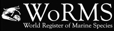 WoRMS (World Register of Marine Species) - logo - 01