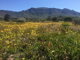 Tokai Park A small section of Table Mountain National Park in Cape Town, South Africa