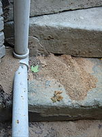 Two nests dug in the cracks of a concrete staircase. The second nest is between the wall and the pipe.
