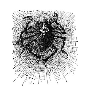 Svengali - Svengali as a spider in his web. Illustration by George du Maurier, 1895.