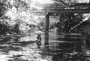Nicasio Creek - Nicasio Creek