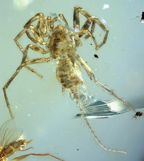 <i>Chimerarachne</i> genus of extinct arachnids