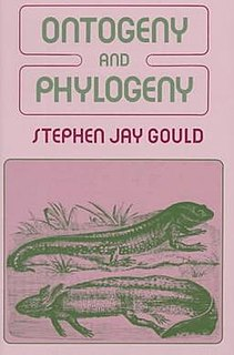 <i>Ontogeny and Phylogeny</i> (book) book by Stephen Jay Gould