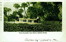 Postcard showing a portion of a lake with thick and tall water hyacinths obscuring most of the view of the water and dwarfing a 25-foot boat; on the far bank are palms and other trees