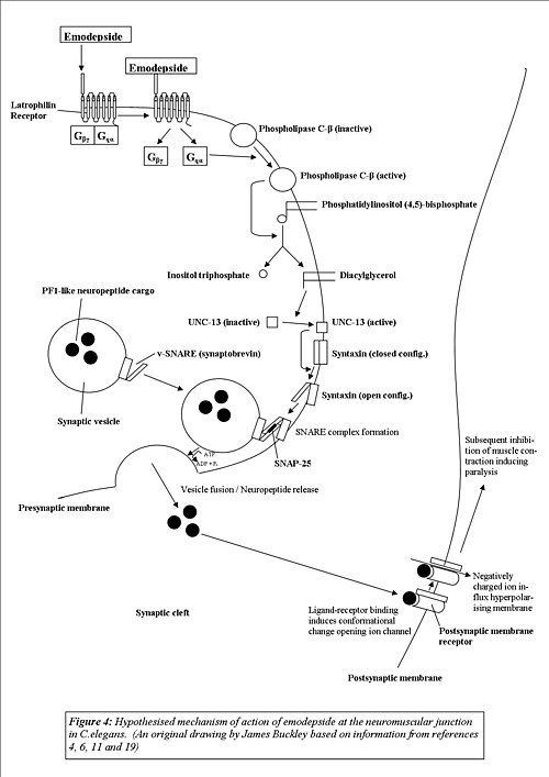 anthelmintic action îndepărtați papilomul de pe scrot