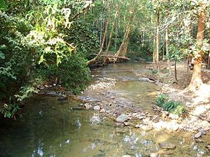 Mount Belumut - Image: Stream @ foot of gunung belumut