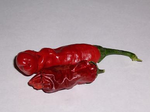 Peter pepper - Mature Peter red chili next to a dried pod