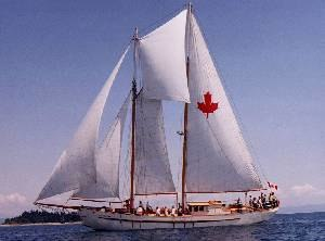 Fisherman's staysail - The schooner Maple Leaf. The fisherman is the trapezoidal sail between the two masts