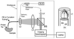 Angle-resolved low-coherence interferometry - Schematic of a/LCI system. Light is provided by SLD, sample and reference light are generated by fiber splitter (FS), while lenses L2, L3, and L4 provide collimation. The beamsplitter (BS) combines sample and reference arm light, which is then incident on the imaging spectrometer. On the right is the optical geometry of probe tip with illumination fiber (DF), lens L1, and collection fiber (FB).