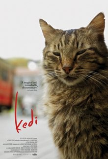 "A cat looking at the viewer with its eyelids nearly shut, looking sleepy. The title ""kedi"" is shown to its right in red."