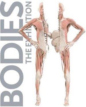 Bodies: The Exhibition - Promotional poster.