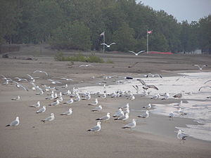 A flock of gulls on the beach.